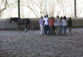 Teambuilding. El Escorial. SAS
